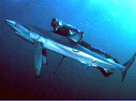 Дайверы смогут плавать с акулами и слушать музыку